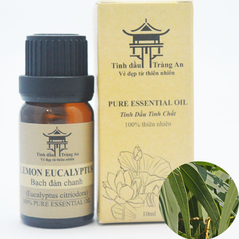 Tinh Dầu Bạch Đàn Chanh - Eucalyptus Citriodora